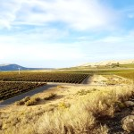 6 Reasons Why Wine Lovers Should Visit Red Mountain