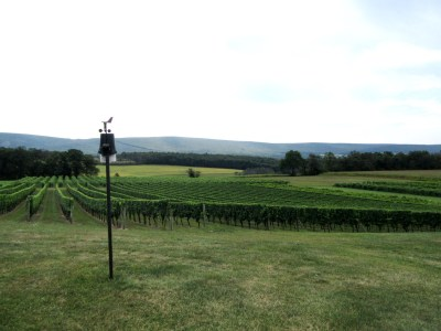 At Galen Glen Winery bird-distress recordings protect grapes from birds. Wine Casual