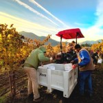 Oregon Biodynamic Wine in the Spotlight: Stunning Examples from Troon Vineyard and Winderlea Vineyards & Winery