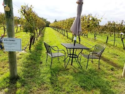 Outdoor seating between vineyard rows at Auburn Road Vineyards.  Wine Casual