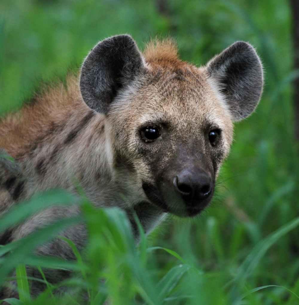 animal animal photography blur carnivore