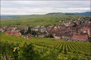 Hugel Vineyards