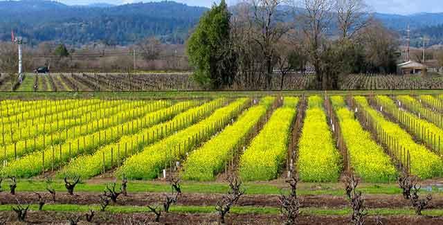 Redwood highway wineries