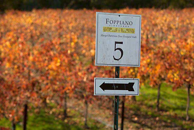vineyard walk Foppiano