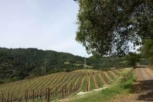 Marston Vineyards