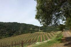Marston Vineyards
