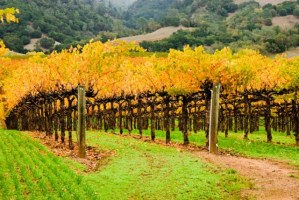 wine country autumn