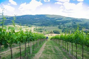 umbria wine country in may