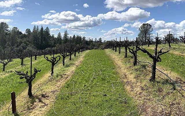 cedarville vineyards