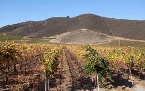 Eden Rift on the Hollister wine trail