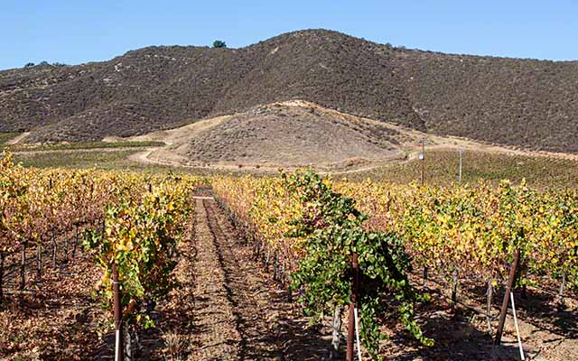 hollister hidden wine country