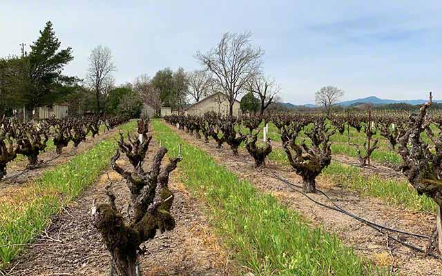 Olivet Road Wine Trail