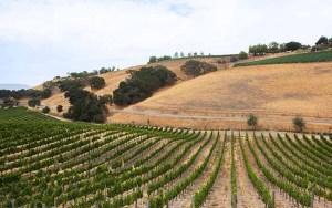Santa Barbara Wine Country