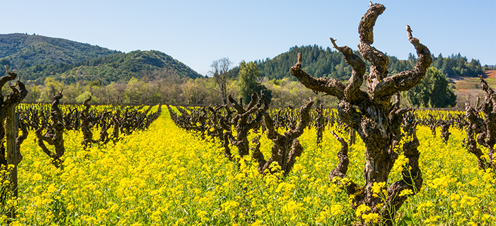 Sonoma County wine tours, sonoma valley tours, Sonoma wine tasting