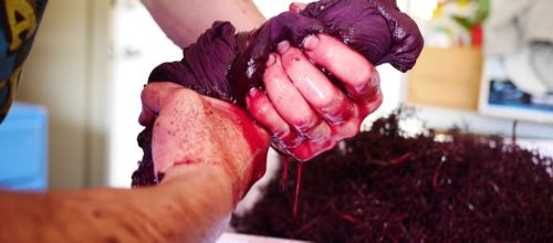 Removing Stalks from a Shiraz Ferment for Wine Decoded by Paul Kaan