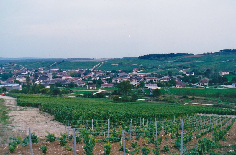 vineyards-of-the-cote-des-blanc-champagne-for-wine-decoded-by-paul-kaaan
