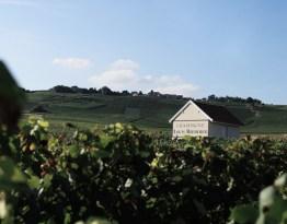 Roederer Vineyard 1