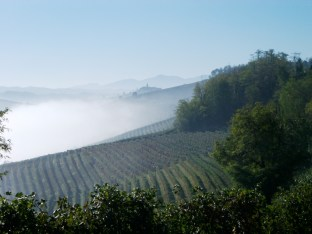 Springtime fog kisses the vineyards of the Barolo appellation not far from Montforte d'Alba.