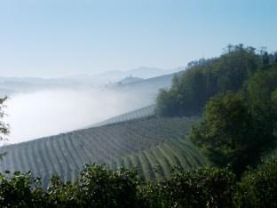 Springtime fog kisses the vineyards of the Barolo appellation not far from Montforte d'Alba.