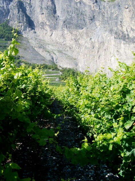Vineyards of Simon Maye et Fils in Chamonson, Valais, CH