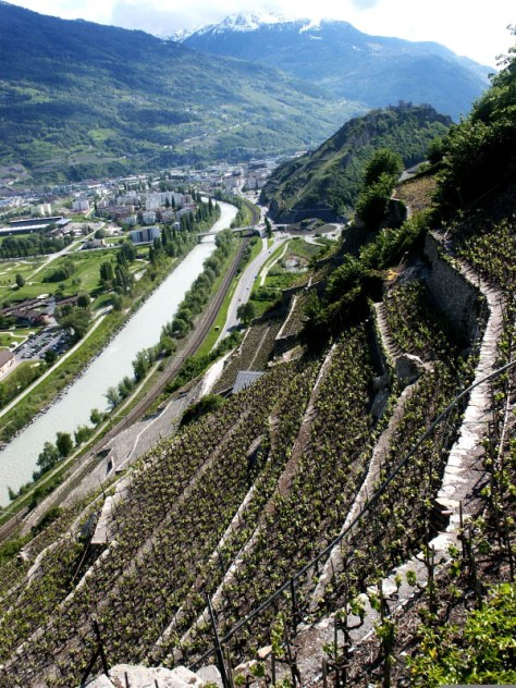 Terraced vineyards of Valais above the Rhone River