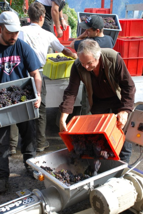 Like all winemakers in Valais, Nicolas Bagnoud works hard during the vendange.