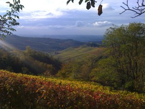 Spell-binding autumn colors of Piemonte's vineyards can still be seen and enjoyed on cloudy, autumn days.