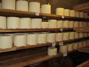 Wheels of fresh Castelmagno d'alpeggio beginning their nine months of aging in Des Martins' cellars.