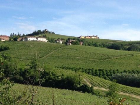 Vineyards below Tre Stelle in the Barbaresco appellation.