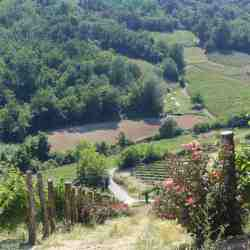 The steepest and one of the most precious of the Marenco vineyards - Scrapona in Valle Bagnario