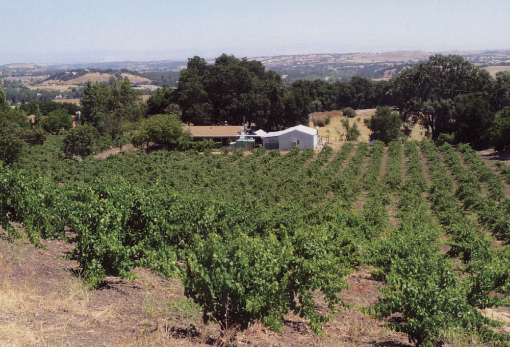 A. Martinelli Winery and vineyards