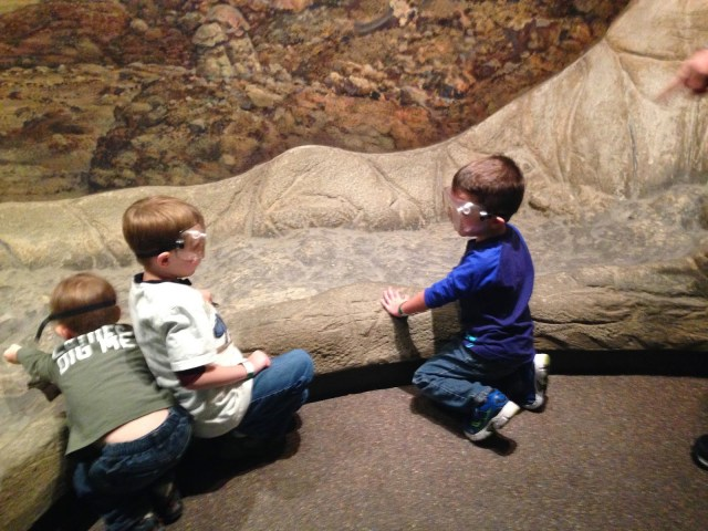 fossil dig academy of natural sciences