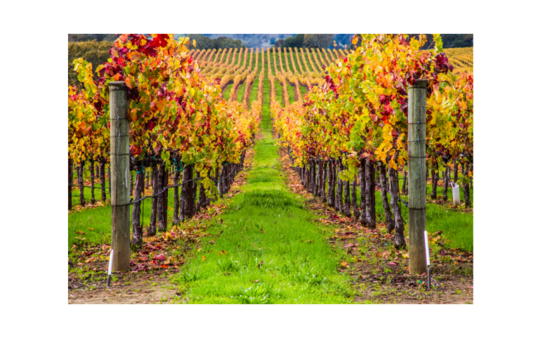 A Journey Through Sonoma Wine Country