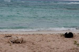 Bohio Dive Resort Beach, Grand Turk