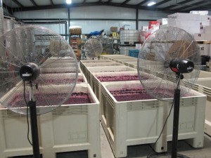 Cougar Vineyared and Winery nurtures their crushed fruit on De Portola Wine Trail