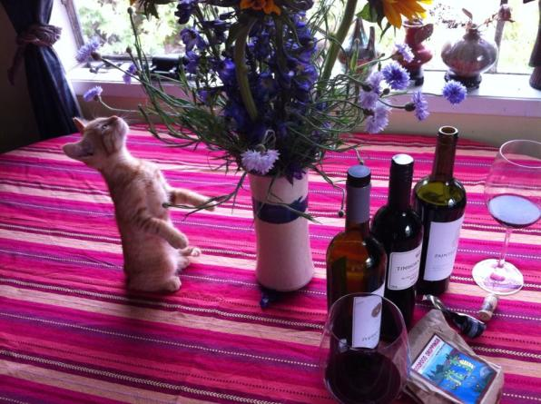 kittenOKmerlotflowers1