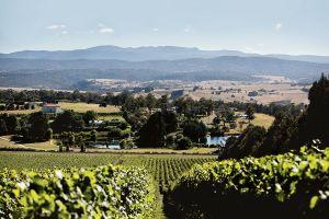 Tasmanian Winery for sale