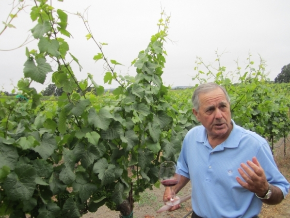 Stephen-Hansel-in-the-vineyard