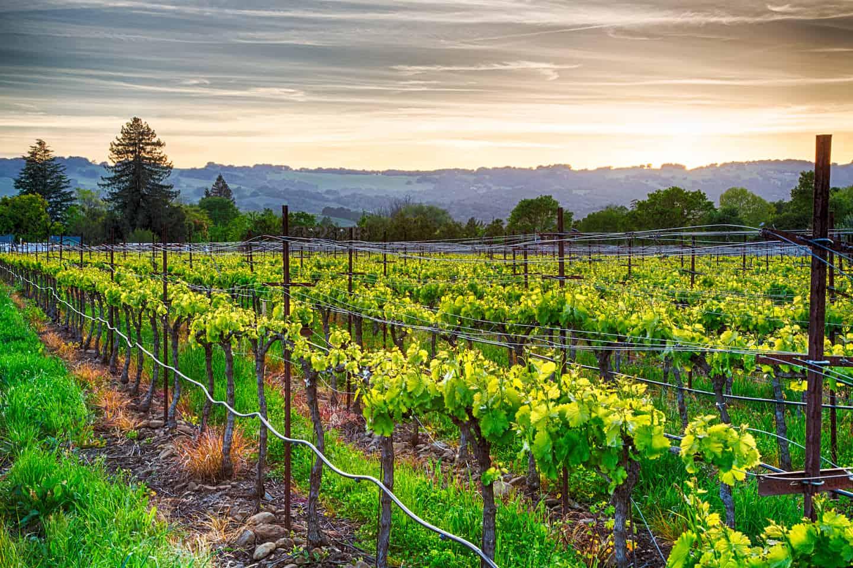 Winery Tours San Francisco