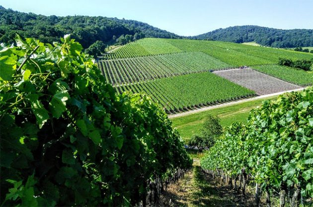 Jefford on Monday: Europe's screwcap kings