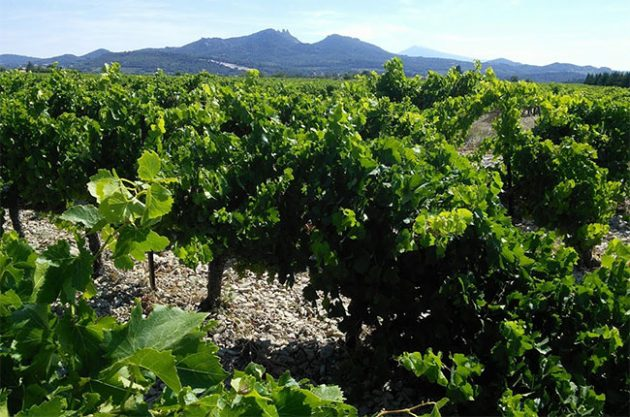 vacqueyras vineyards, rhone, jefford