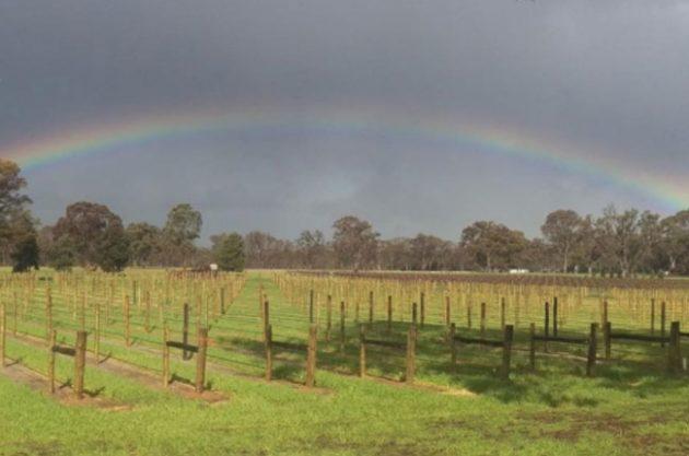 Anson: South Australia's wine pioneer