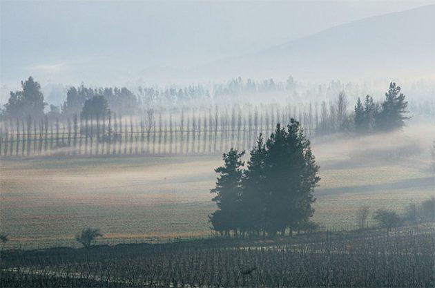 Antinori buys Chilean winery Haras de Pirque
