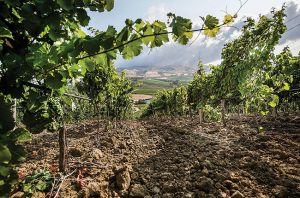 Ten Sicilian wineries at the top of their game