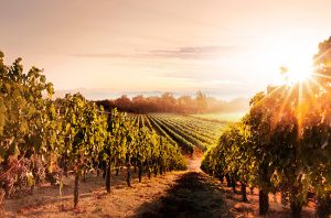 Netflix to release Napa-based Wine Country movie