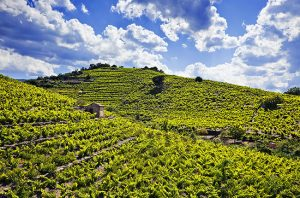 Top Grenache wines from around the world