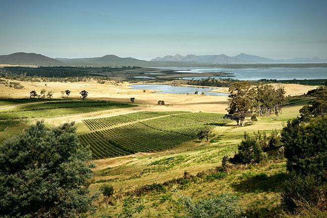 tasmania vineyards