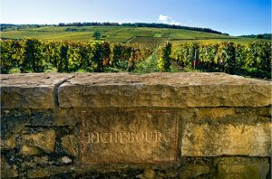 Richebourg grand cru, burgundy vineyard
