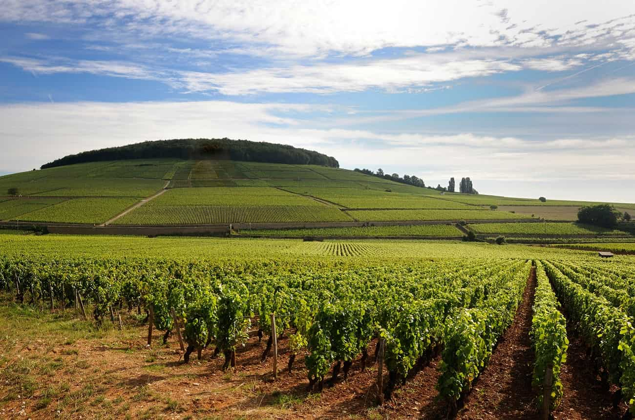 Prices for top French vineyards rise again in 2018