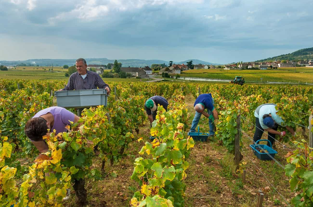'One-off' Montrachet from DRC, Leflaive and Comtes Lafon sells for £5,000-a-bottle